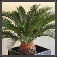 0 salon vert plantes for Acheter des plantes vertes