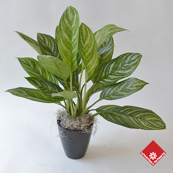 achat de plantes vertes fleuriste montr al le pot de fleurs On achat plantes vertes