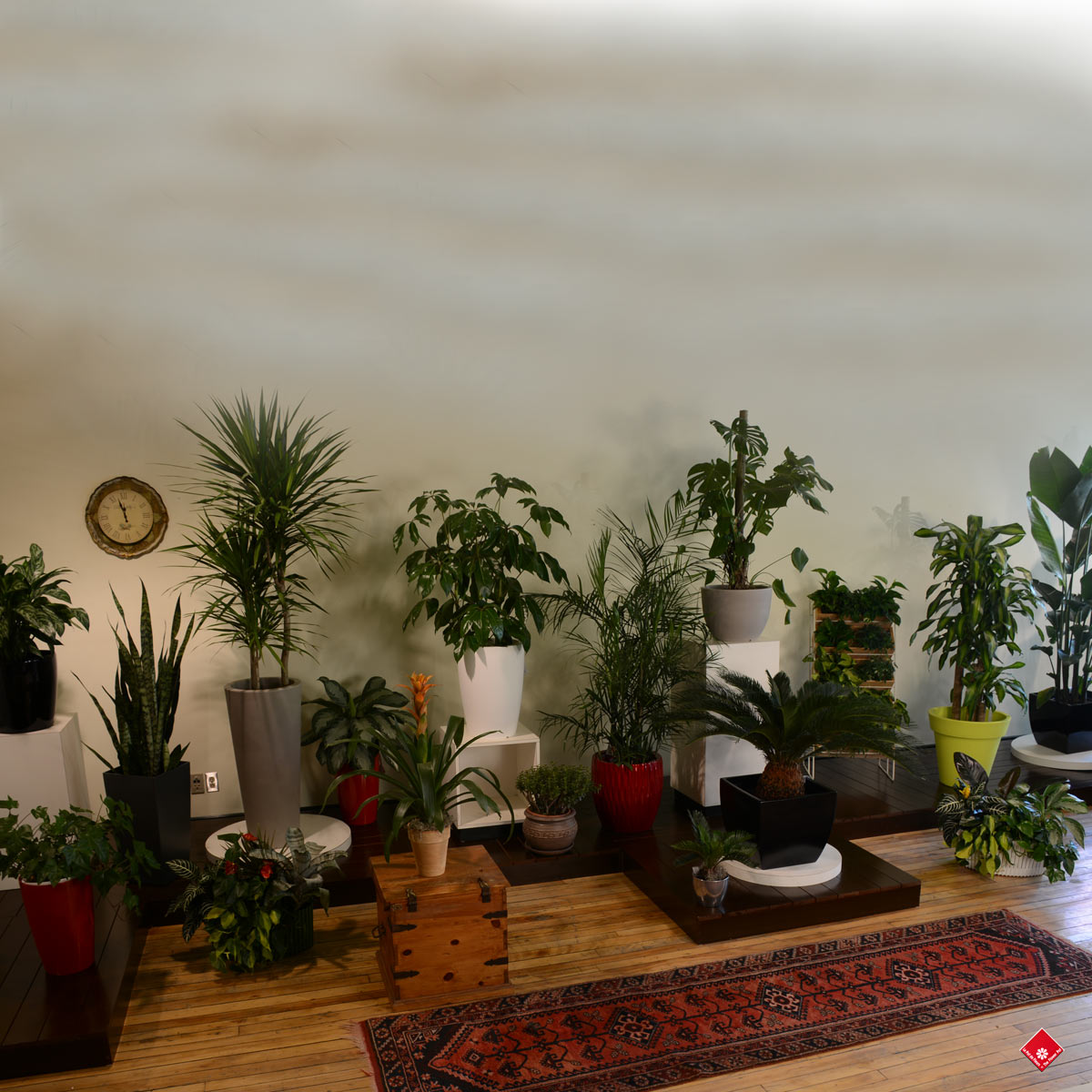 0 salon vert plantes for Plante pour salon