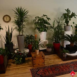 Plantes Vertes Variees Dans Le Salon Vert