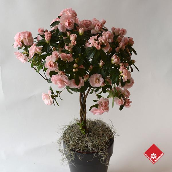 Plantes d 39 int rieur fleurs montr al le pot de fleurs for S occuper d un citronnier en pot