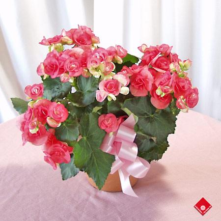 Produits hors saisons le pot de fleurs for Jardin deluxe fleurs