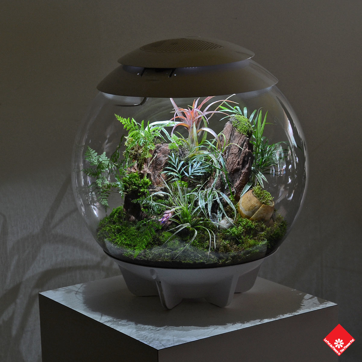0 salon vert plantes - Cloche de jardin en verre ...