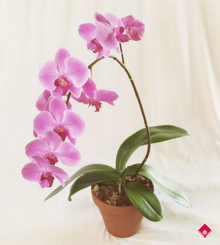 Pot orchid e for Fleurs artificielles chez ikea