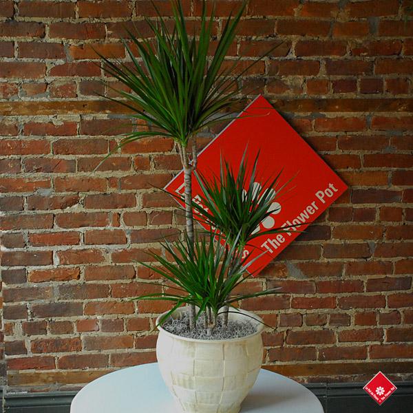 Plantes tropicales d interieur montreal for Plantes tropicales d interieur