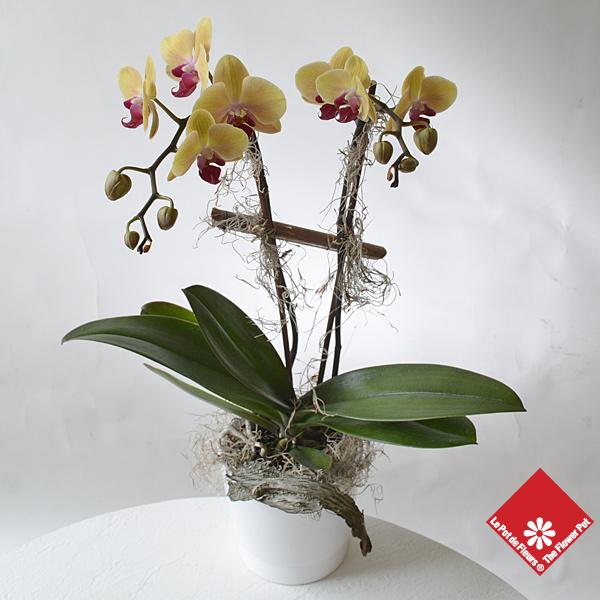 plant d 39 orchid e dans un pot en terre cuite fleuriste le pot de fleurs. Black Bedroom Furniture Sets. Home Design Ideas