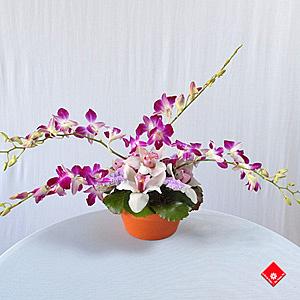 orchid es cymbidium dendrobium montr al le pot de fleurs. Black Bedroom Furniture Sets. Home Design Ideas
