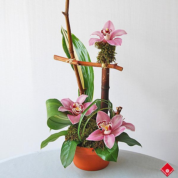 orchid es cymbidium de chez votre fleuriste montr al le pot de fleurs. Black Bedroom Furniture Sets. Home Design Ideas