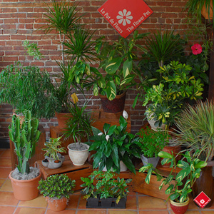 plantes vertes de chez votre boutique de plantes montr al le pot de fleurs. Black Bedroom Furniture Sets. Home Design Ideas